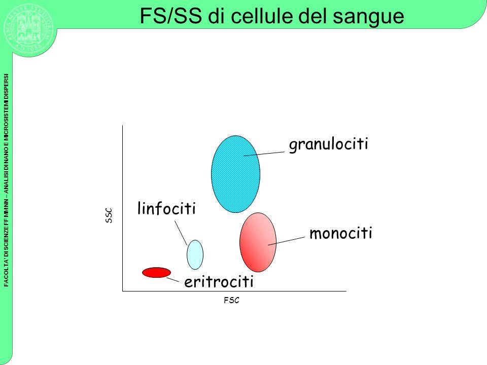 FS/SS di cellule del sangue