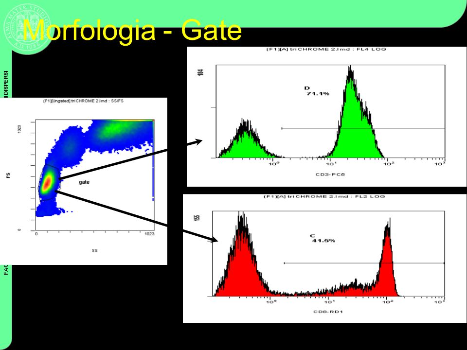 Morfologia - Gate Coulter Cytometry