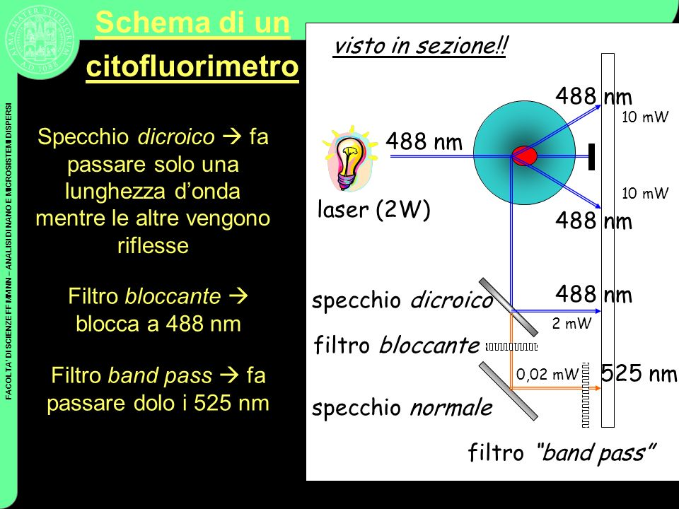 Schema di un citofluorimetro