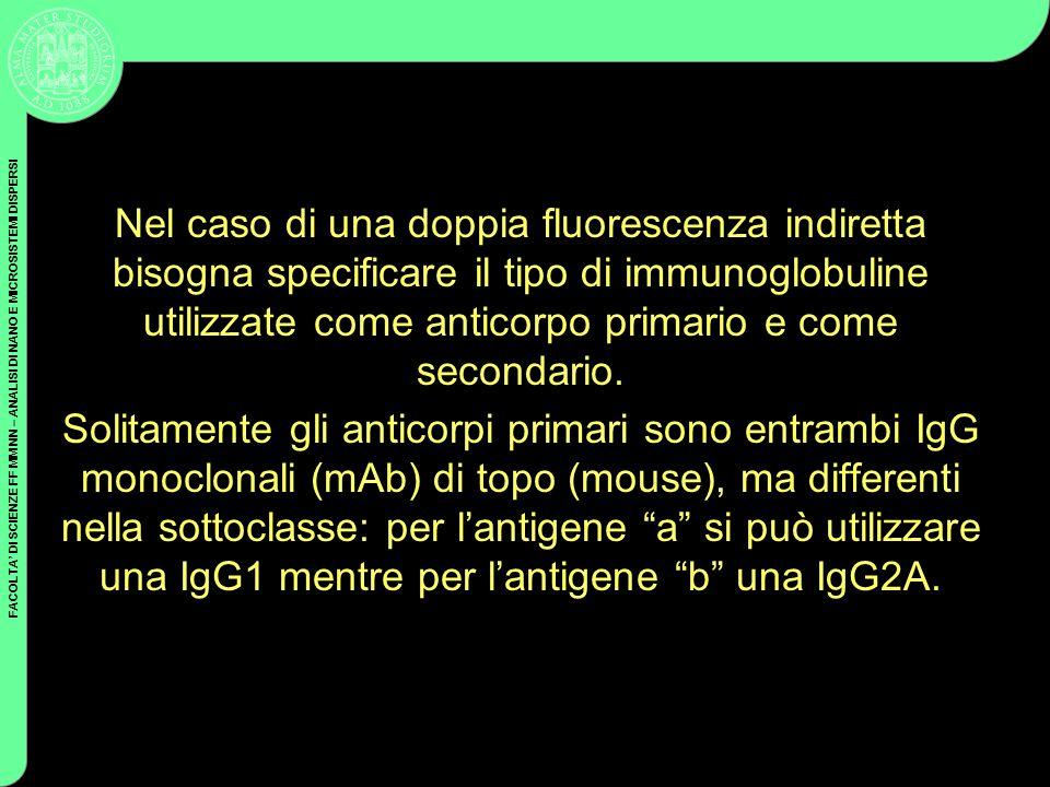 Nel caso di una doppia fluorescenza indiretta bisogna specificare il tipo di immunoglobuline utilizzate come anticorpo primario e come secondario.