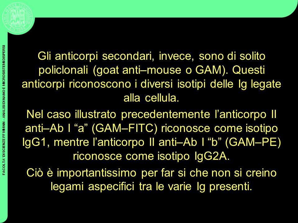 Gli anticorpi secondari, invece, sono di solito policlonali (goat anti–mouse o GAM). Questi anticorpi riconoscono i diversi isotipi delle Ig legate alla cellula.