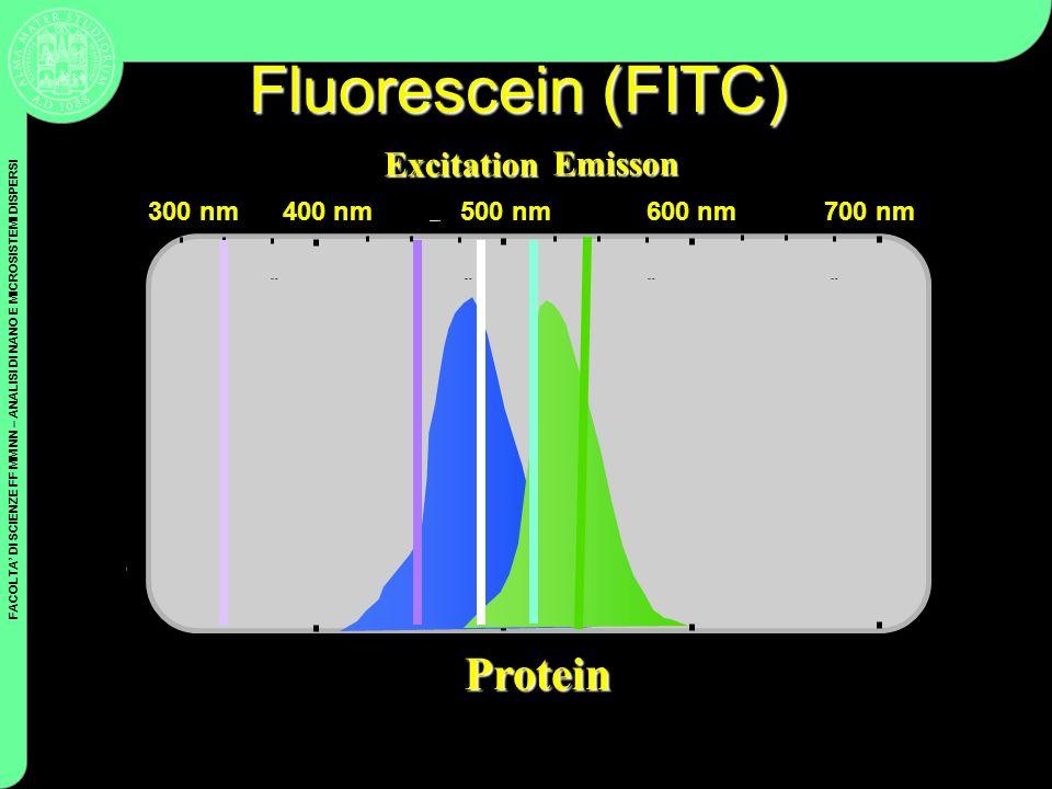 Fluorescein (FITC) Protein Excitation Emisson