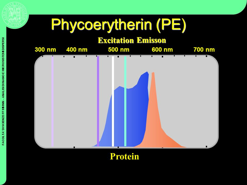 Phycoerytherin (PE) Protein Excitation Emisson