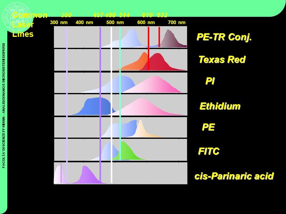 PE-TR Conj. Texas Red PI Ethidium PE FITC cis-Parinaric acid Common