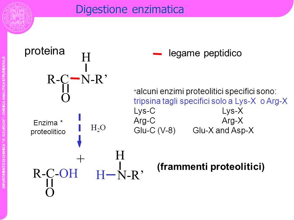 + H R-C N-R' O H R-C-OH H N-R' O Digestione enzimatica proteina