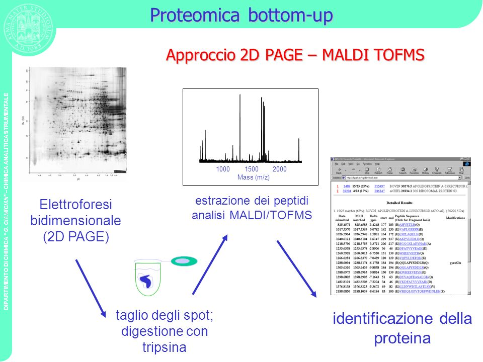 Proteomica bottom-up Approccio 2D PAGE – MALDI TOFMS