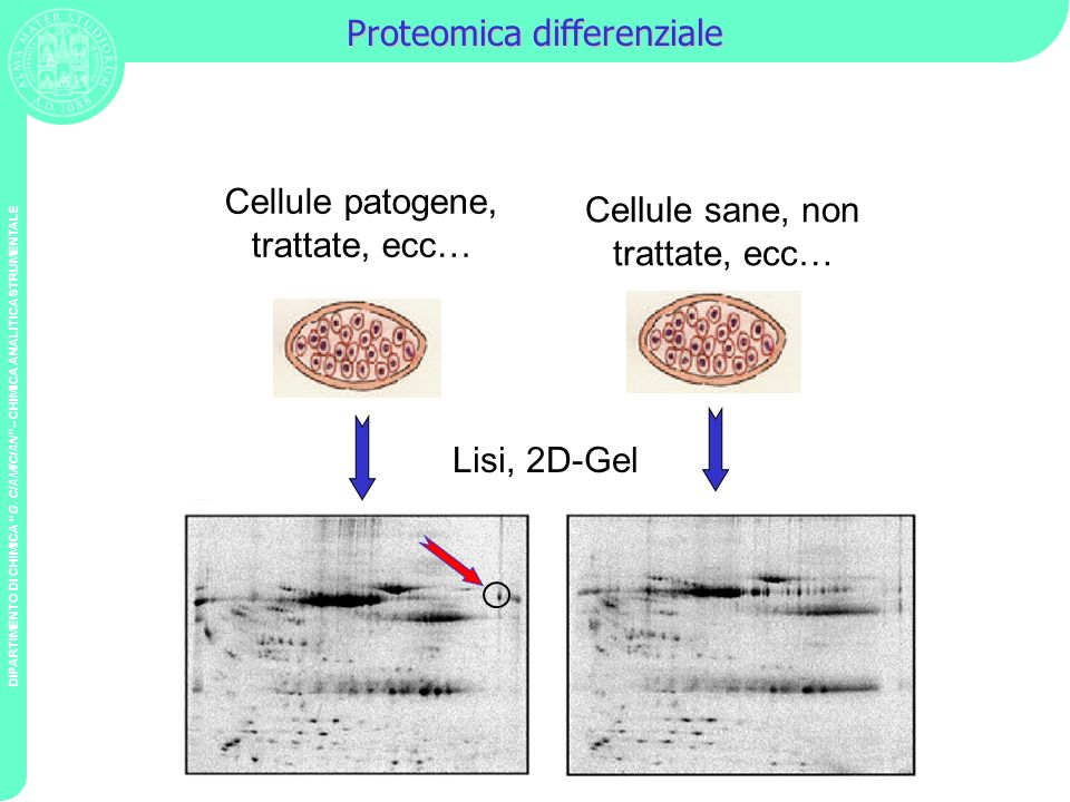 Proteomica differenziale