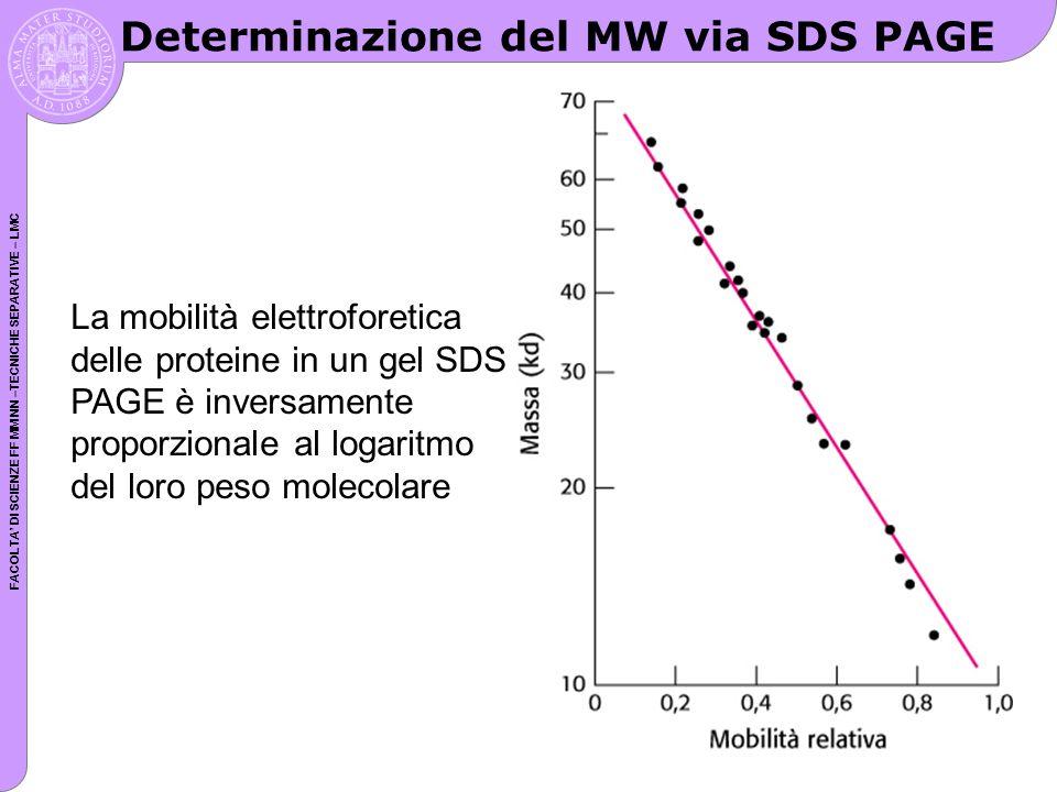 Determinazione del MW via SDS PAGE