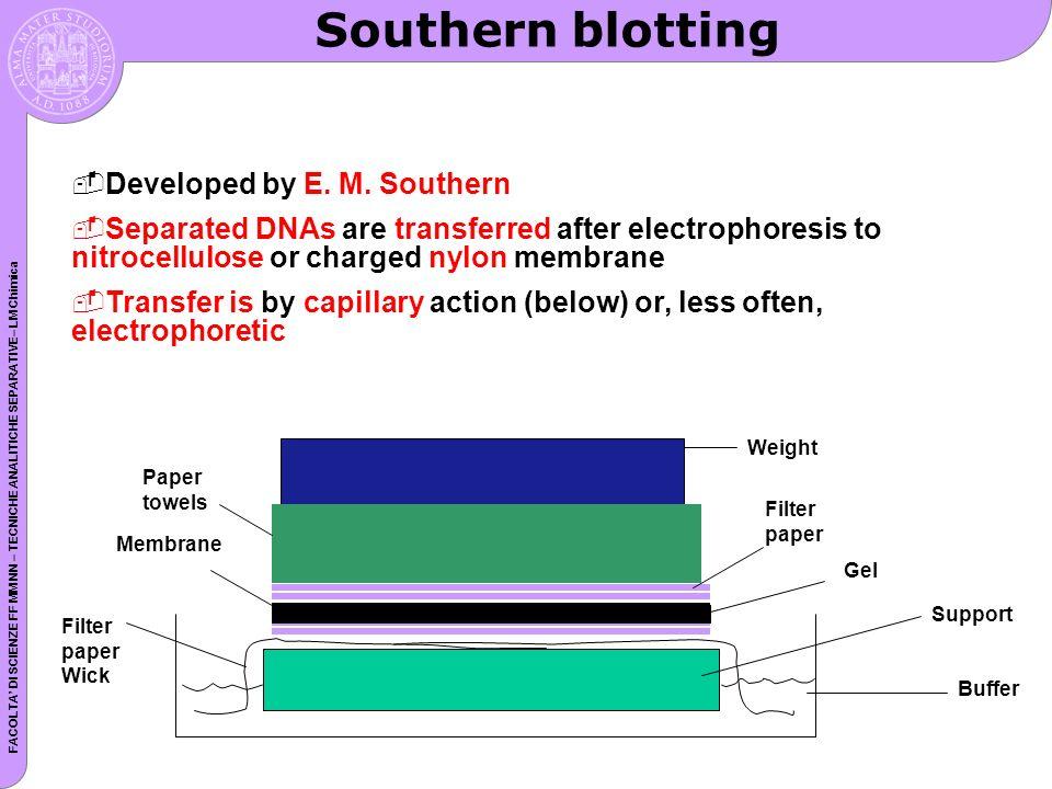 Southern blotting Developed by E. M. Southern