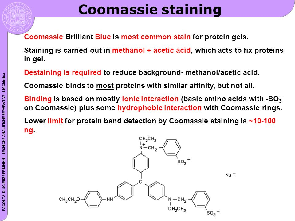 Coomassie staining Coomassie Brilliant Blue is most common stain for protein gels.