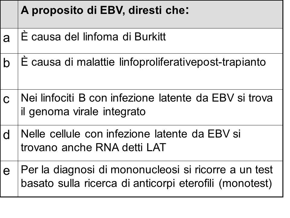 a b c d e A proposito di EBV, diresti che: