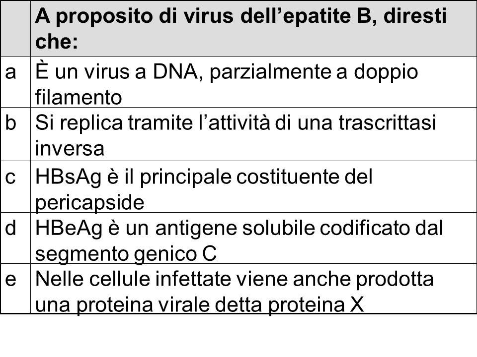 Nelle cellule infettate viene anche prodotta una proteina virale detta proteina X