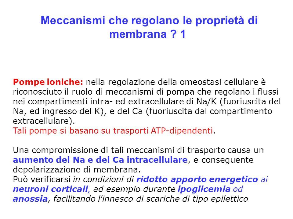 Meccanismi che regolano le proprietà di membrana 1