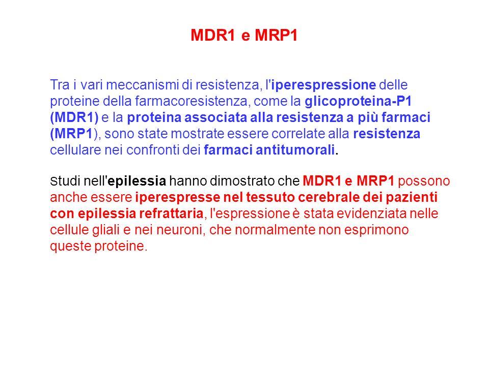 MDR1 e MRP1