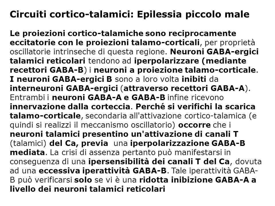 Circuiti cortico-talamici: Epilessia piccolo male