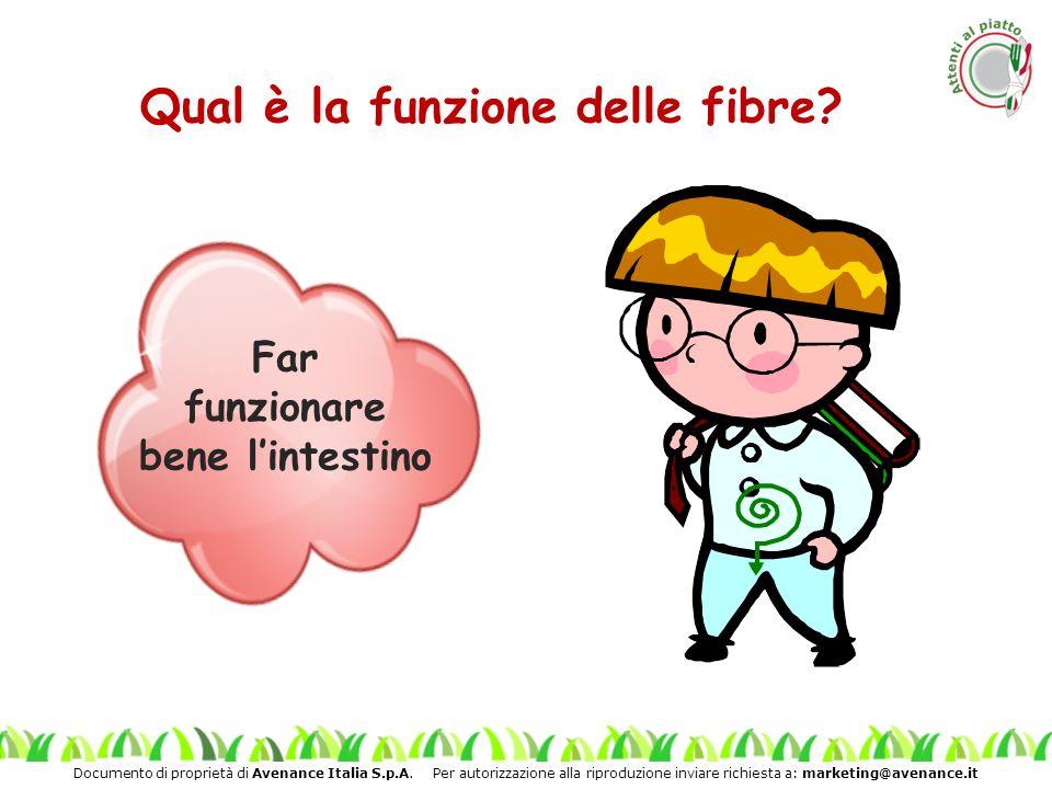 Qual è la funzione delle fibre