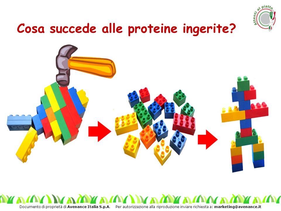 Cosa succede alle proteine ingerite
