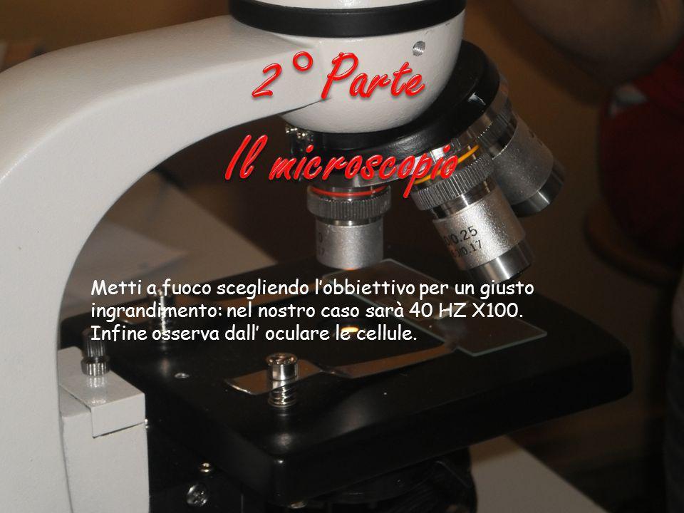 2° Parte Il microscopio. Metti a fuoco scegliendo l'obbiettivo per un giusto ingrandimento: nel nostro caso sarà 40 HZ X100.