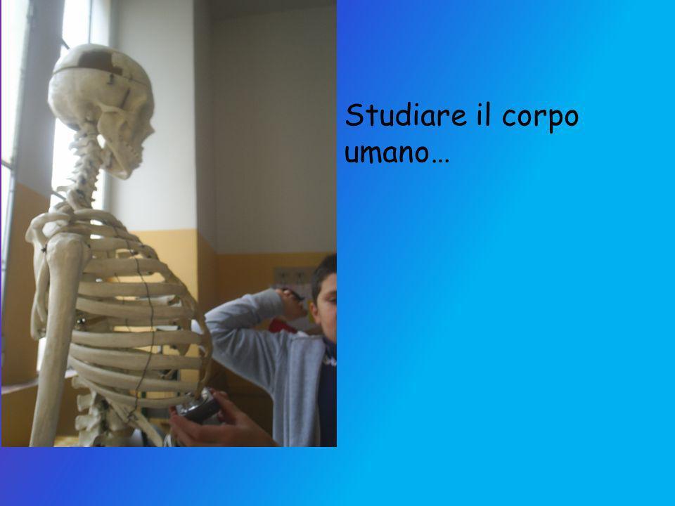 Studiare il corpo umano…