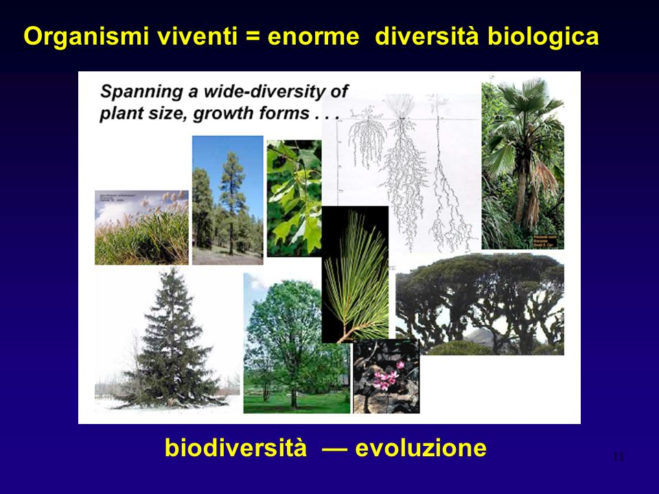 Organismi viventi = enorme diversità biologica