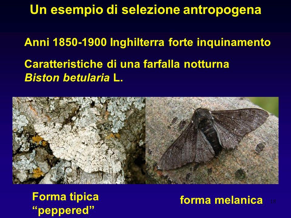 Un esempio di selezione antropogena