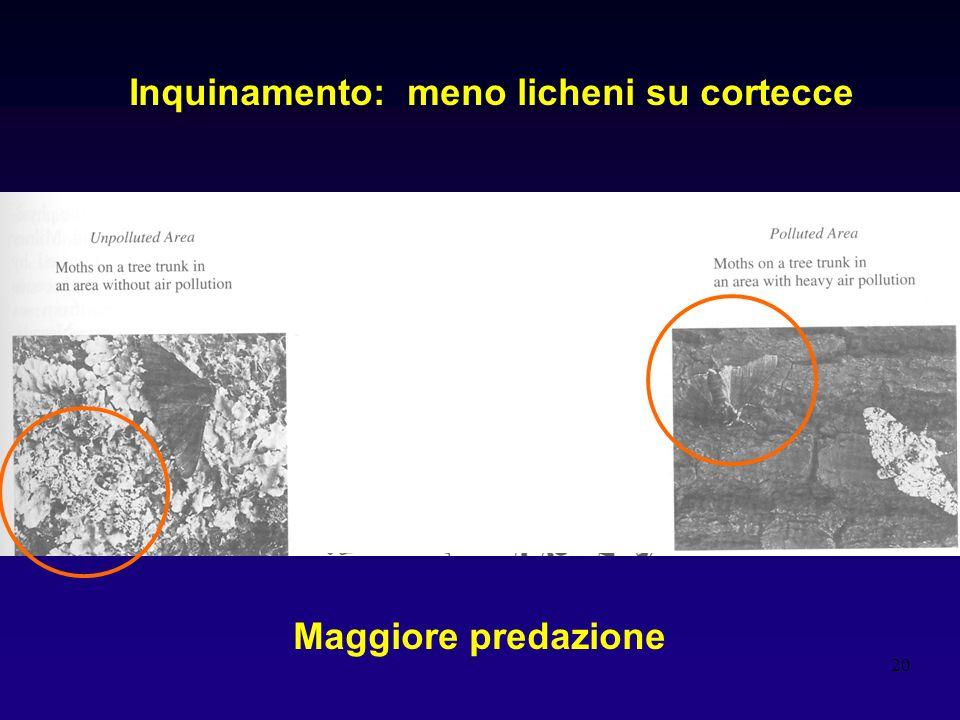 Inquinamento: meno licheni su cortecce
