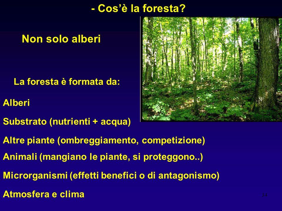 - Cos'è la foresta Non solo alberi La foresta è formata da: Alberi