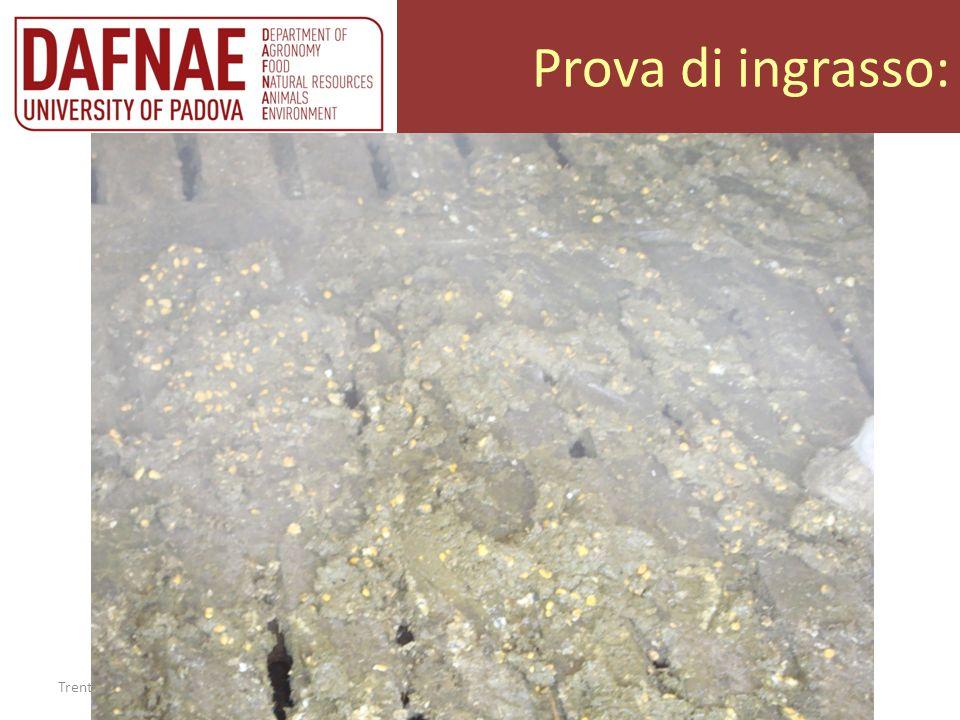 Prova di ingrasso: Trento 20/02/2013 Allevatori insieme