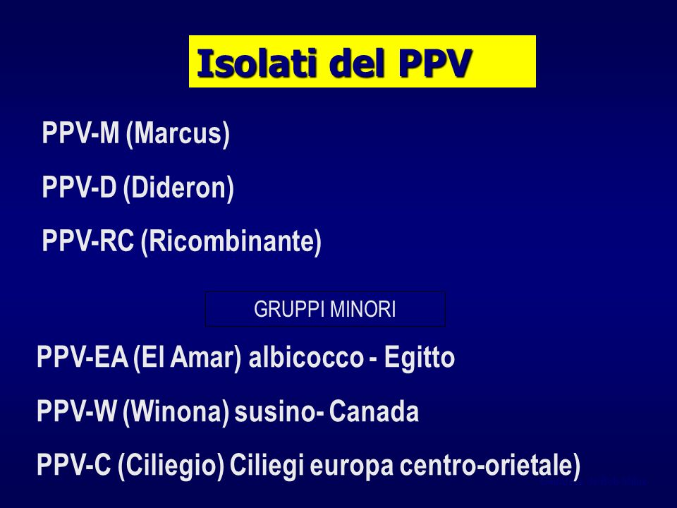 Isolati del PPV PPV-M (Marcus) PPV-D (Dideron) PPV-RC (Ricombinante)