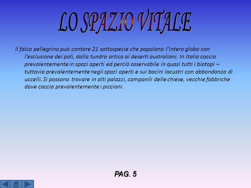 LO SPAZIO VITALE