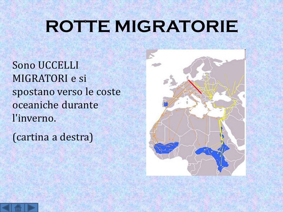 ROTTE MIGRATORIE Sono UCCELLI MIGRATORI e si spostano verso le coste oceaniche durante l inverno.