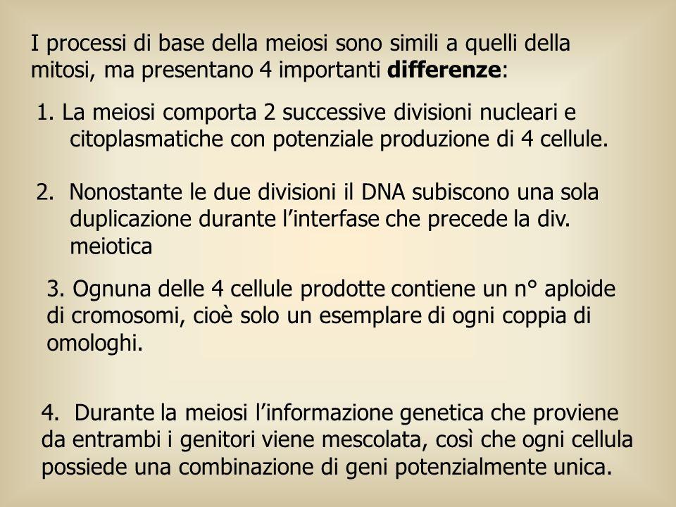 I processi di base della meiosi sono simili a quelli della mitosi, ma presentano 4 importanti differenze: