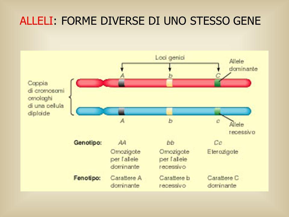 ALLELI: FORME DIVERSE DI UNO STESSO GENE