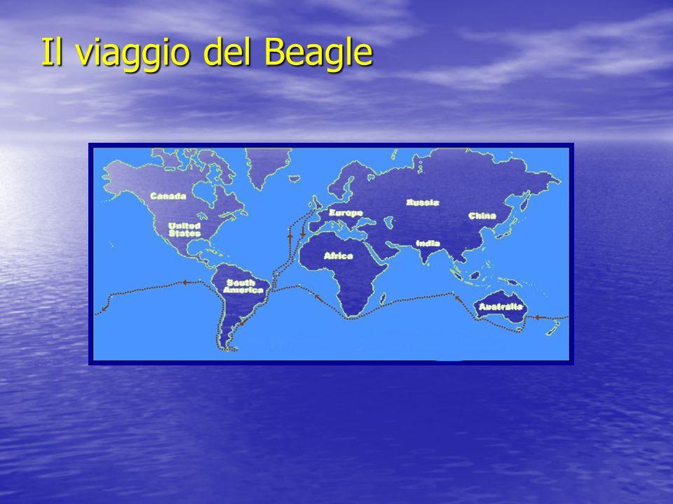 Il viaggio del Beagle