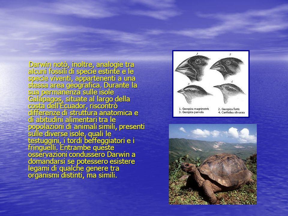 Darwin notò, inoltre, analogie tra alcuni fossili di specie estinte e le specie viventi, appartenenti a una stessa area geografica.
