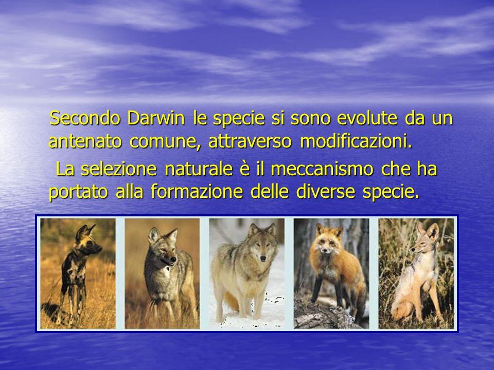 Secondo Darwin le specie si sono evolute da un antenato comune, attraverso modificazioni.