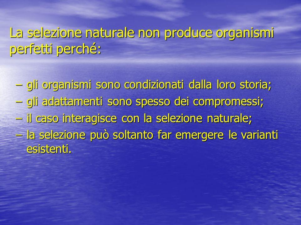 La selezione naturale non produce organismi perfetti perché: