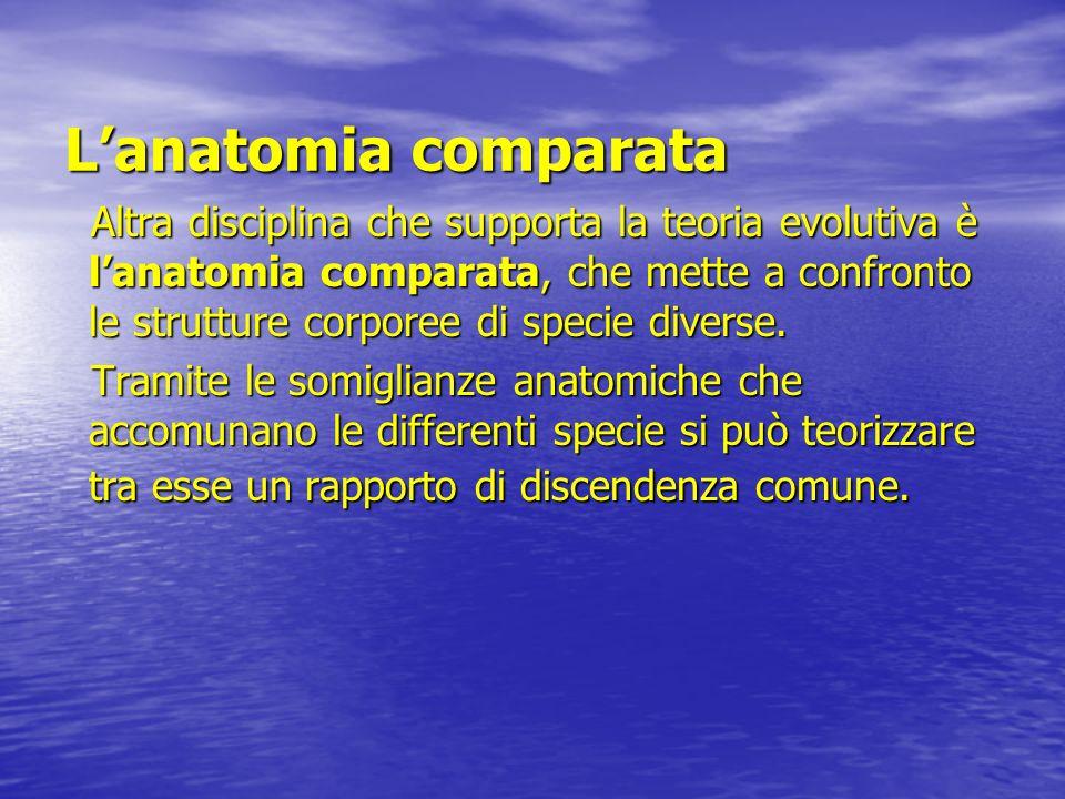 L'anatomia comparata