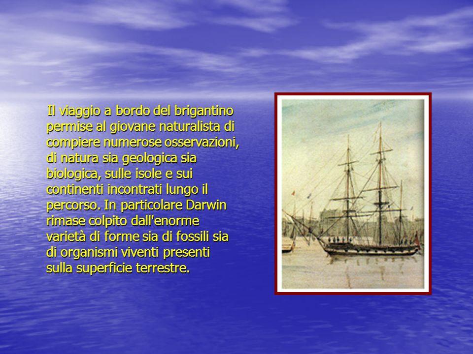 Il viaggio a bordo del brigantino permise al giovane naturalista di compiere numerose osservazioni, di natura sia geologica sia biologica, sulle isole e sui continenti incontrati lungo il percorso.