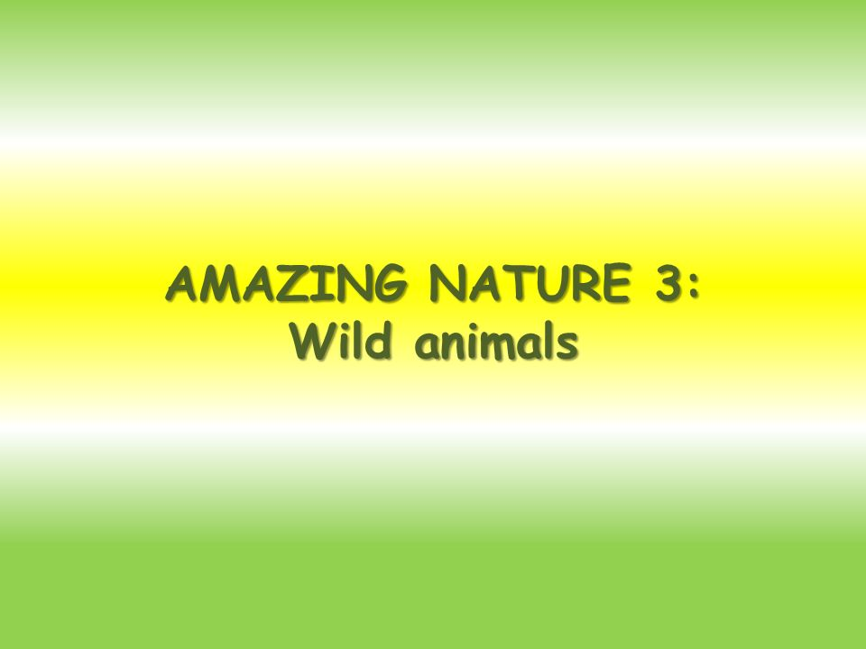 AMAZING NATURE 3: Wild animals