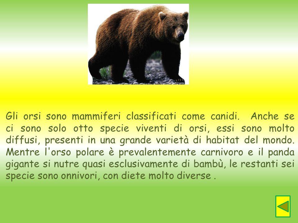 Gli orsi sono mammiferi classificati come canidi
