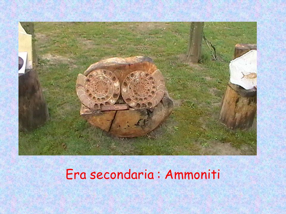 Era secondaria : Ammoniti