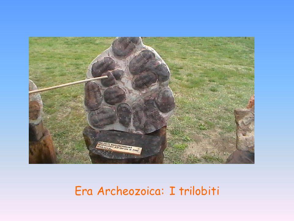 Era Archeozoica: I trilobiti