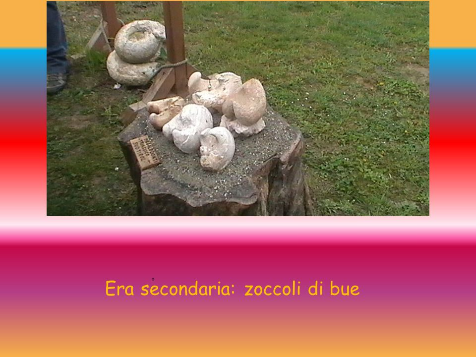 Era secondaria: zoccoli di bue