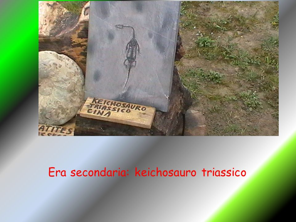 Era secondaria: keichosauro triassico