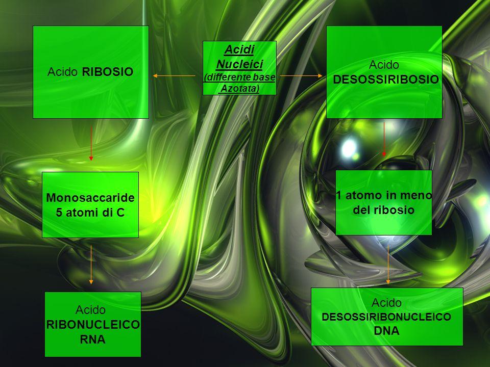 Acido RIBOSIO Acido DESOSSIRIBOSIO Acidi Nucleici Monosaccaride