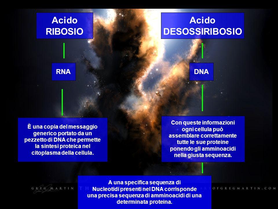Acido RIBOSIO Acido DESOSSIRIBOSIO