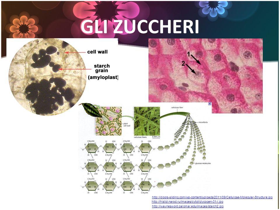 GLI ZUCCHERI http://doors-sliding.com/wp-content/uploads/2011/09/Cellulose-Molecular-Structure.jpg.