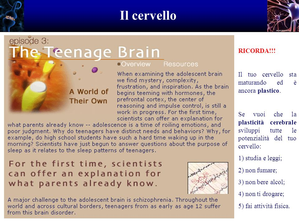 Il cervello RICORDA!!! Il tuo cervello sta maturando ed è ancora plastico.
