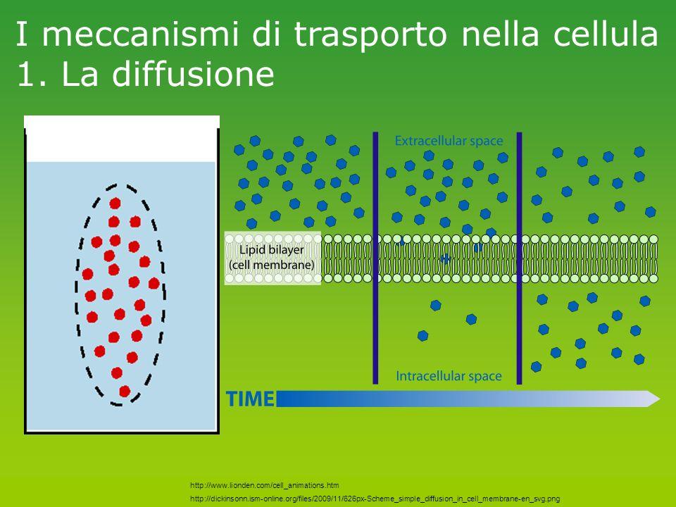I meccanismi di trasporto nella cellula 1. La diffusione